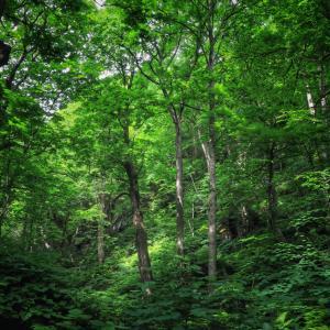 新緑の奥入瀬渓流散策その1