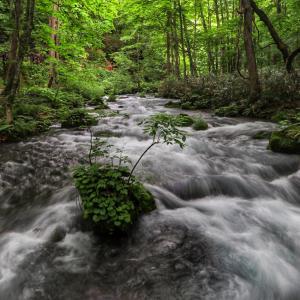 新緑の奥入瀬渓流散策 その3