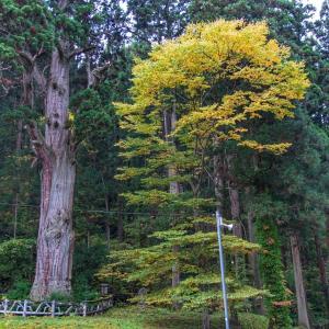 樹齢2000年超『普門山大圓寺の門杉』