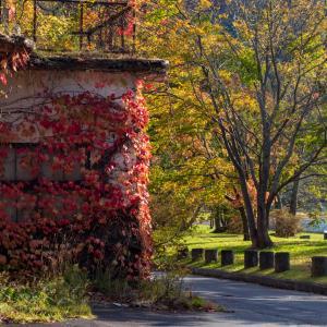 紅葉の蔦に覆われた廃墟『十和田淡水魚水族館』