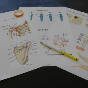 ヨガ解剖学 ~肩甲骨、肩関節編~ 酵素玄米きのこカレー粉