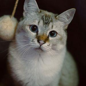 保護猫カフェがコロナ危機?なにが?
