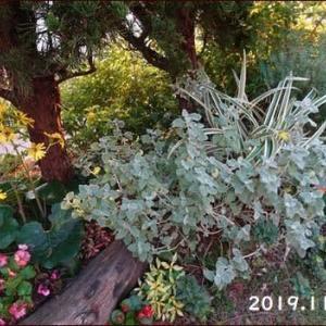 庭の植物で作るクリスマスリース(1)