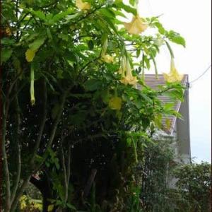 12月のエンジェルス★庭の植物を使って30分でできるXmasリース