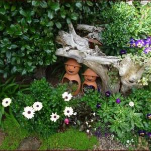 福岡でもついに感染者★飛び石の役割と芝生の花