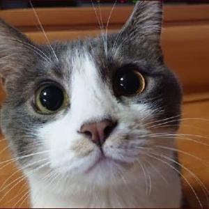 特別な猫の日★何を蒔いたの?