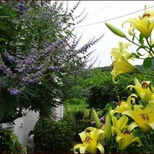 トリプルコラボ★梅雨時の庭仕事