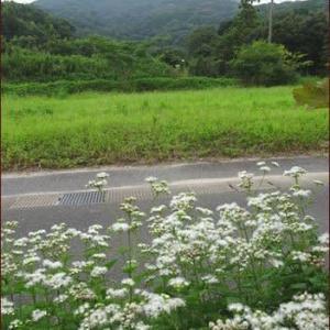 Cafeコーナー今昔★正ちゃんに庭のお花を