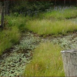 樫原湿原の花々(3)★栗ご飯