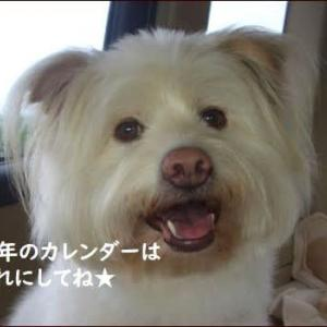 <バラとハーブのある暮らし2021>辻典子さんのアレンジメント