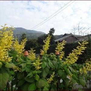 ホワイトアウルの色★広い庭の悩み
