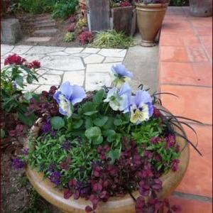 庭の「和」について★冬の花