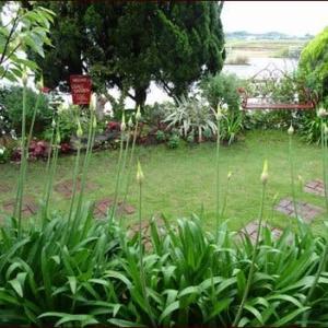 アナベルの庭1★八重咲きペチュニアの存在感