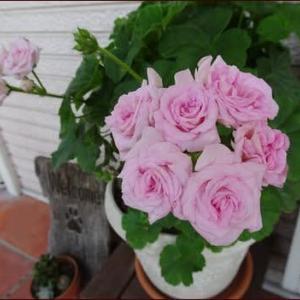 秋まで楽しむ夏の寄せ植え1★お庭でランチ