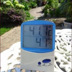41℃超えの梅雨明け★涼を呼ぶガーデニング
