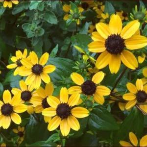 正ちゃんに庭のお花を★ミモザの花芽