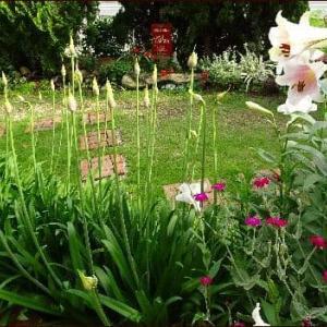 初夏の庭でポーチュラカを植える