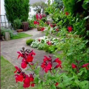 ブログについて★庭の色