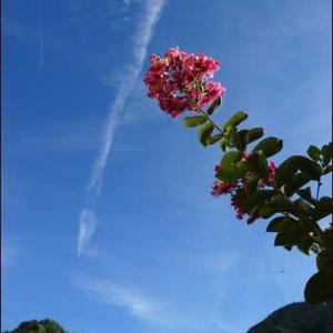花かき氷★植物の力