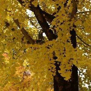 法禅寺の紅葉