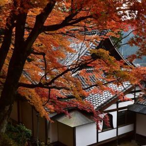 下呂温泉寺の見事な紅葉を撮る