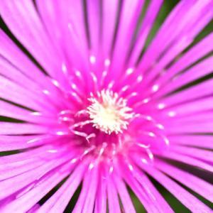 近くで見かけた花