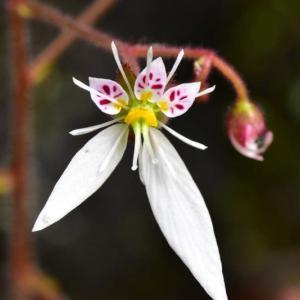 法禅寺の庭園に咲く花