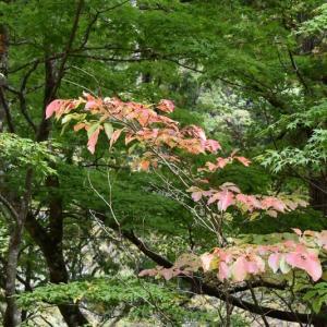 紅葉を訪ねて  渡合地区の西俣「赤石園」へ