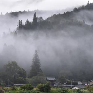 当地の法禅寺を包む朝霧
