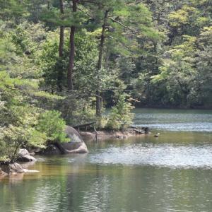高峰湖と木の実