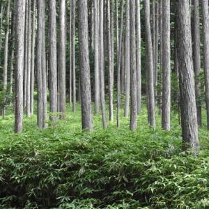 木曽越え林道