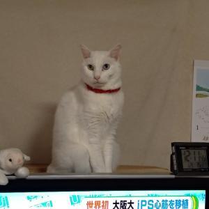 ネコを連れずに獣医さんへ