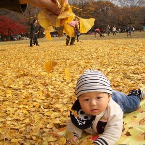 落葉の時期のお楽しみとマストアイテム