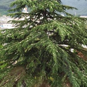 卵の生る木