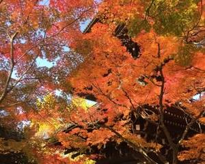 もみじがきれい 〜二度目の京都〜