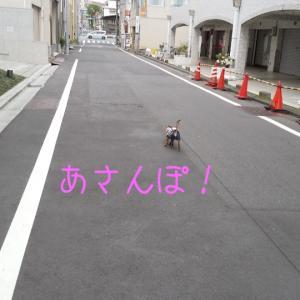 2010日目 雨降る前にあさんぽ!