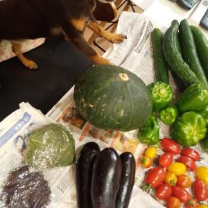 2065日目 野菜たくさん!
