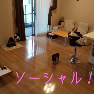 2164日目 ソーシャルディスタンス!