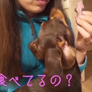2301日目 ちぇっ YouTube更新しました!