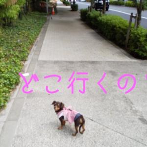 2374日目 ザ・キャピトルホテル東急でドッグフレンドリープラン