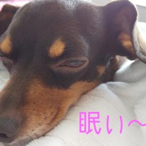 2375日目 赤坂あさんぽ