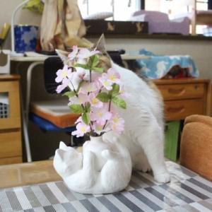桜とほたる!