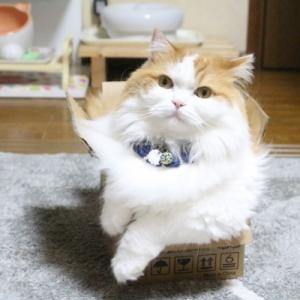 猫は液体!