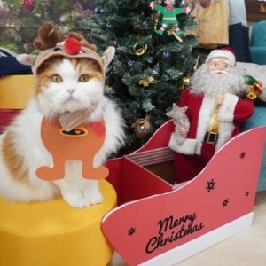忙しすぎるクリスマス!