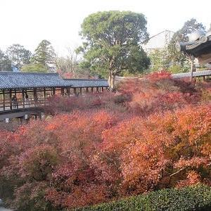 泉屋博古館で「花と鳥の四季」、東福寺通天橋の紅葉@京都