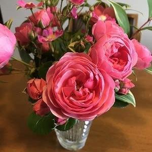 バラの季節が到来