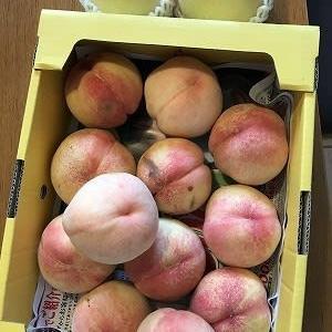 桃農家さんで出荷できない桃をゲット