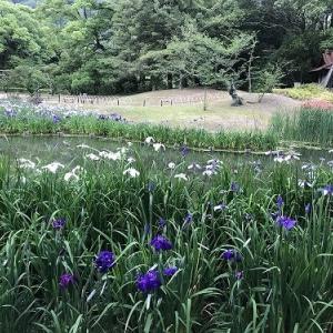 花菖蒲を見に栗林公園へ@高松