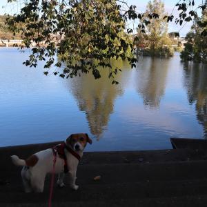【リブログ】災害時は犬を置き去り?