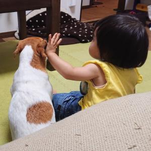 【気になる娘とハナの関係性(1歳~11/1)】